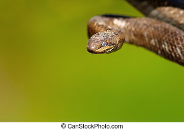 portrait of smooth snake over green out of focus background...