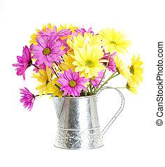 Shasta Daisy Flowers In Water Can - Chrysanthemum Maximum:...