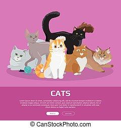 Cats Breeds Flat Vector Web Banner - Cats conceptual web...