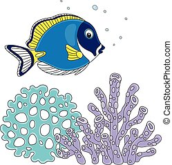 Blue surgeon fish - Vector illustration of a blue-faced...