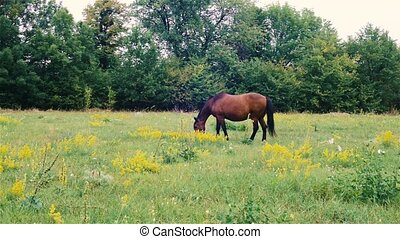 Brown horse pasture outdoor. beautiful horse in the pasture.