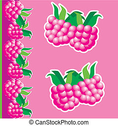 Raspberries. - Raspberries isolated on a pink background....