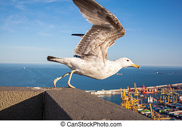 Seagull with view over Barcelona - Seagull with view over...