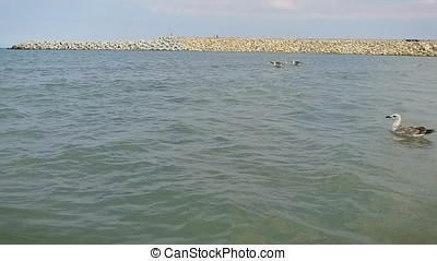Seagulls resting on water, slow motion