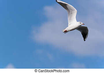 Sea bird flying in a sunny day