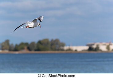 Sea bird flying over water looking for fish
