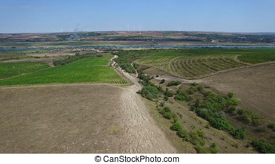 Aerial flight above vineyards, Danube river and windmills on background