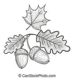 Sketch of an oak leaf and acorn