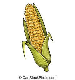 Colorful sketch style illustration of corn