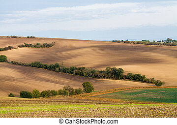 Wavy brown fields, Moravia, Czech Republic