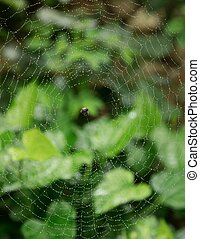 Spider And It's Web