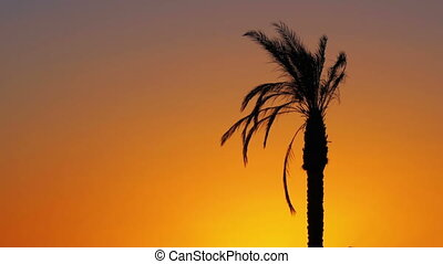 Palm Tree at Red Sunset - Tropical Palm Tree at Sunset. One...