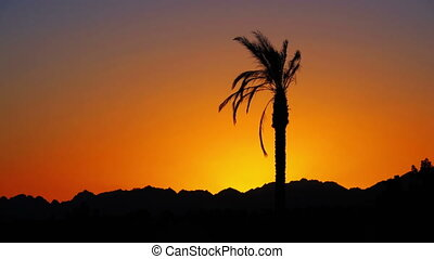 Palm Tree at Sunset - Tropical Palm Tree at Sunset. One long...