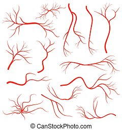 Human eye veins, vessel, blood arteries isolated on white vector set