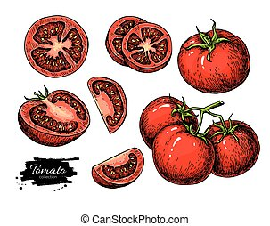 Tomato vector drawing set. Isolated tomato, sliced piece...