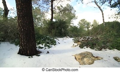 snow in Jerusalem - snow storm Nes Harim settlement...