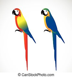 Vector of a parrot (Macaws) on white background. Wild...