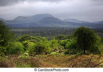Park Tsavo East National - salah satu yang tertua dan taman...