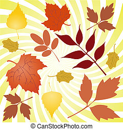 autumn leaves - Several autumn yellowing of leaves from...