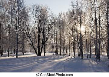 Winter landscape with the sun in the trees