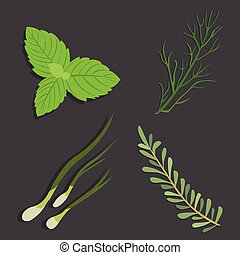 Aromatic herbs set. Fresh and spices . Vector illustration....