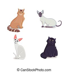Collection Cats of Different Breeds. Vector isolated cat on white background. Home animal or pets. Fanny kittens faces