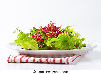 green salad with sprouts - plate of green salad with pea and...