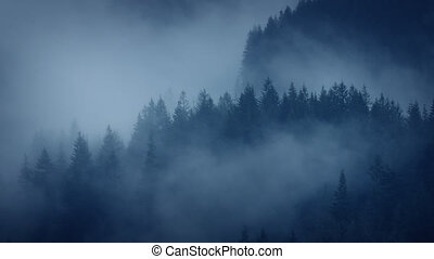 Moody Forest Landscape Shrouded In Mist - Dramatic forest...
