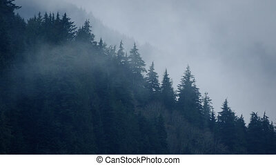 Mist Moving Over Trees In The Wild - Thick mist moves over...