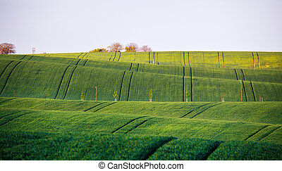 Spring green fields. Beautiful wavy spring view. Spring...