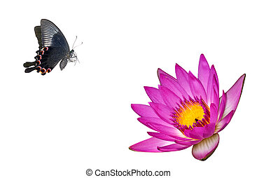 butterfly flower - Butterfly flower in white background