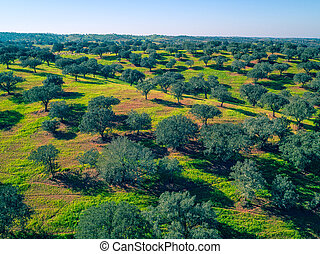 Aerial View Green Fields with Trees