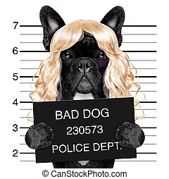 diva chic mugshot - diva lady girl dog posing for a lovely...