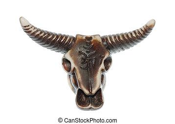 頭骨, 公牛