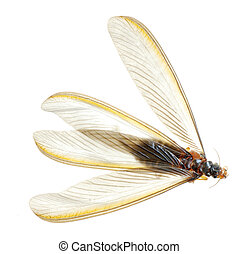 insecto, termita, blanco, hormiga