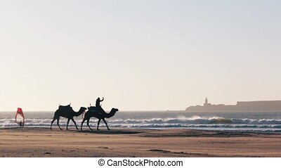 Camel Caravan on the ocean Essaouira Morocco