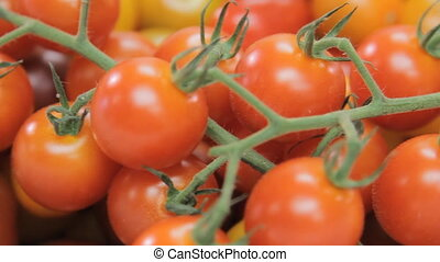 Organic fresh tomatoes - Close up of fresh organic tomatoes....