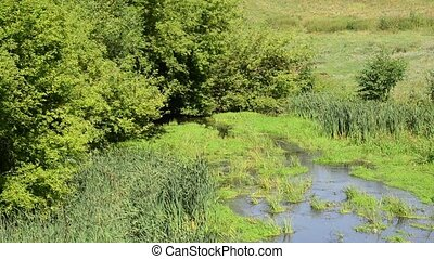 shallow river in thickets of grass and trees, Russia -...