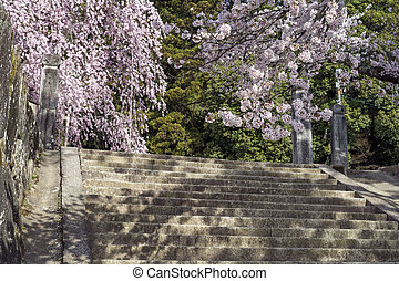 Yoshino cherry blossoms above stone steps in front of...