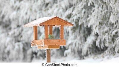 bird great tit (Parus major) feeding in wooden bird feeder -...