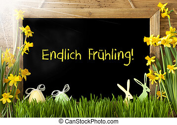 Sunny Narcissus, Easter Egg, Bunny, Endlich Fruehling Means...