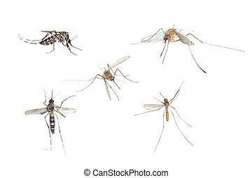 insect mosquito bug set isolated on white background