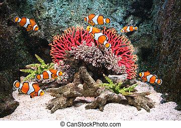 Sea corals and clown fish in marine aquarium
