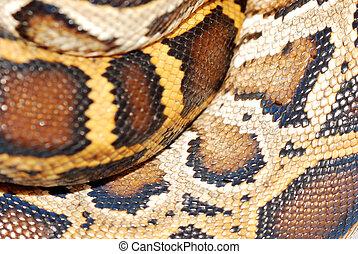 boa snake pattern