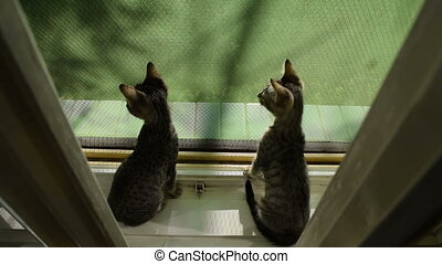 Kittens on the window afraid but exploring