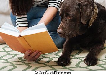Smart cute Labrador looking at something in a book -...