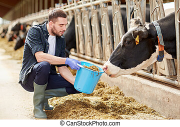 man with cows and bucket in cowshed on dairy farm -...
