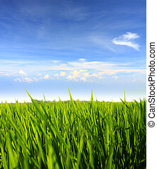 green grass and blue sky - green grass field against blue...