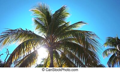 Coconut palms beach - Coconut palms on the beach of...