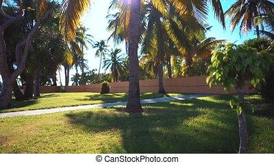 Coconut palms beach - Coconut palms on the beach of...